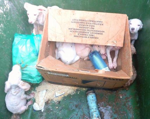 Los animales presentaban muy malas condiciones higiénicas.