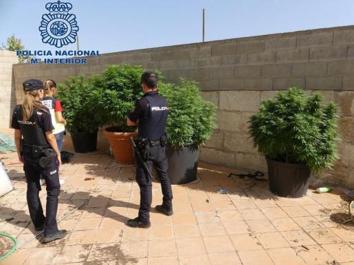 Agentes de la Policía Nacional, junto a la plantación localizada en la azotea de la vivienda.