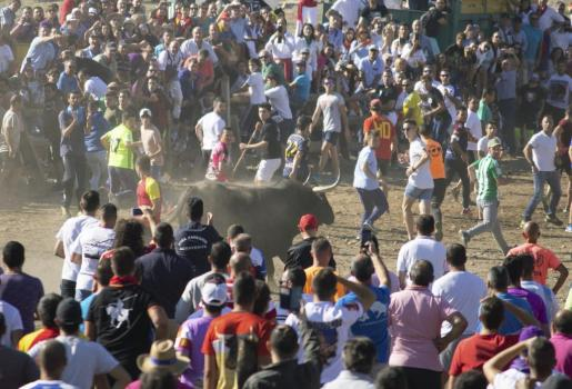 Rápida y peligrosa ha resultado la carrera de Montañesa, un astado corniveleto de la ganadería de Campos Peña, de 670 kilos.