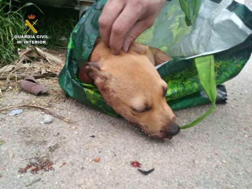 Imagen del can herido tras ser rescatado del interior de un contenedor de basura.