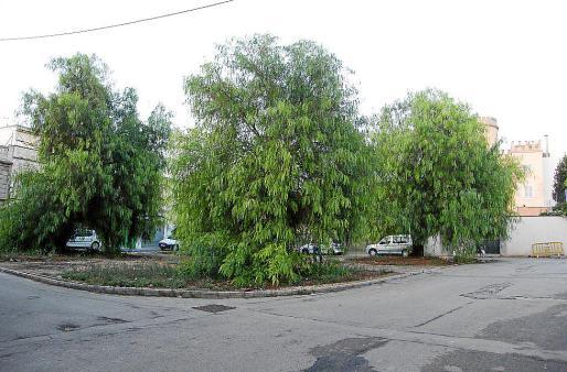 Los árboles de la plaza se conservarán y el nuevo pavimento recordará la función del agua.