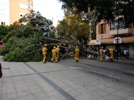 Los bomberos actuando tras la caída del árbol.