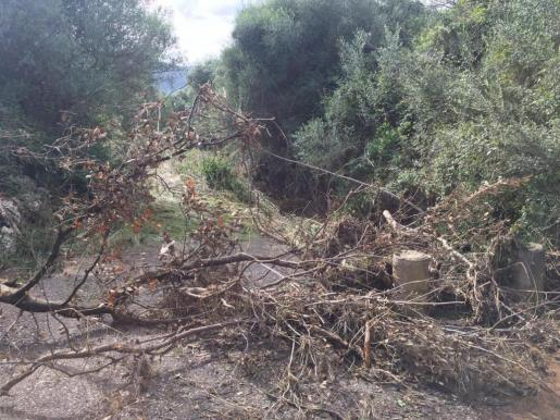 El desbordamiento del torrente de Sant Jordi ha causado daños materiales en viviendas pero también en explotaciones agrícolas, caminos de montaña y paredes secas del municipio de Pollença. La tromba de agua del viernes se llevó por delante muchos cerramientos de rejilla y se han perdido animales.