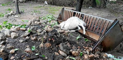 La riada azotó especialmente las explotaciones agrarias.