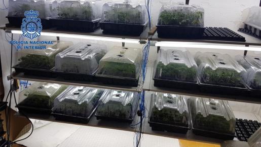 Los detenidos tenían sus propios laboratorios de producción de cogollo con sistemas y elementos de última generación para facilitar el crecimiento y la producción de alta calidad.
