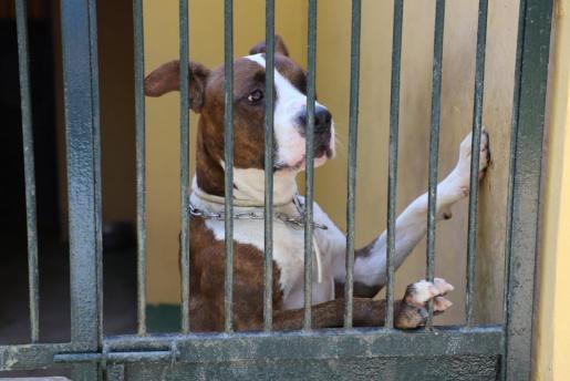 Imagen de un perro en Son Reus.
