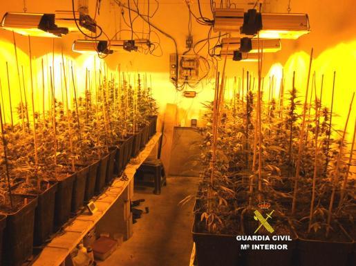Imagen de la plantación de marihuana localizada en Porreres por la Guardia Civil.