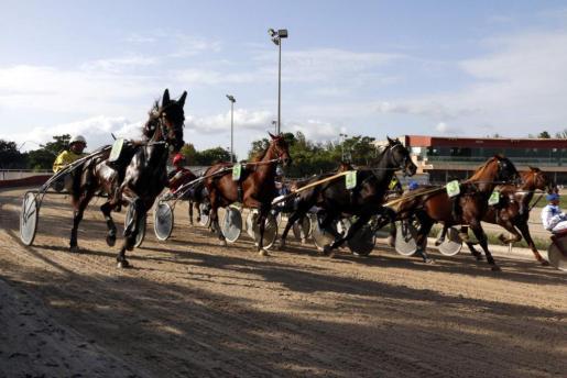 Imagen de una reciente jornada de carreras en el Hipódromo de Manacor.