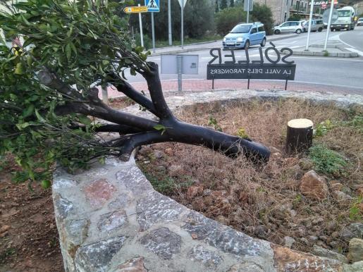 Acto vandálico contra el naranjo de la rotonda principal de Sóller.