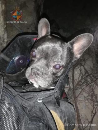 El perro, después de ser rescatado por los bomberos.