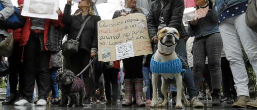 Manifestación en contra del maltrato animal en 2016 organizada en Palma por los grupos animalistas.