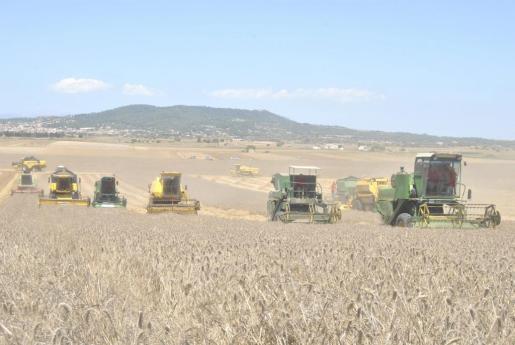 Los cultivos de cereales se verán especialmente afectados por la menor disponibilidad hídrica.