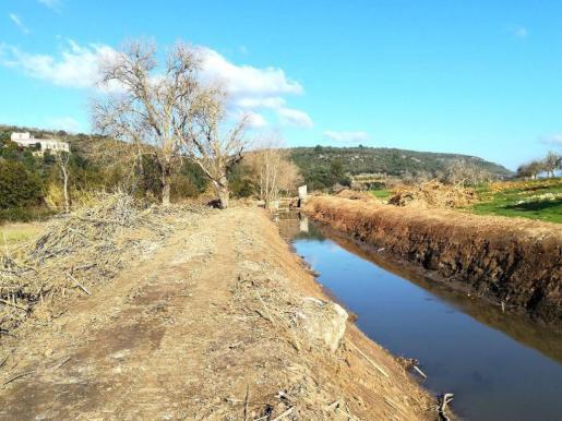 Denuncian que las tareas de limpieza han arrasado parte del torrente y del arroyuelo de Na Borges a su paso por la Vall de Manacor.