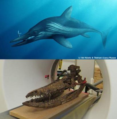 El lugar donde murió este animal fue clave para propiciar la conservación de su cráneo.
