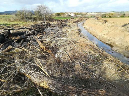 Terraferrida detalla que han localizado «decenas y decenas de árboles cortados arrebatados y heridos» en los torrentes.