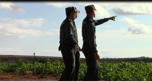 La Guardia Civil busca en una finca de Muro el cuerpo del hombre desaparecido.