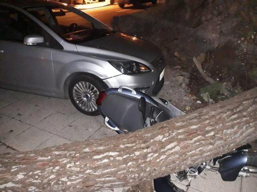 Imagen de un árbol que ha caído sobre una motocicleta.