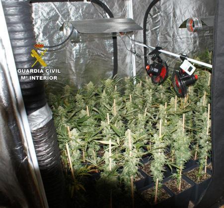La plantación de marihuana fue descubierta a raíz de que la Guardia Civil.