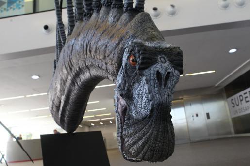 Vista de una maqueta del 'Bajadasaurus pronuspinax', un nuevo dinosaurio descubierto en la Patagonia.
