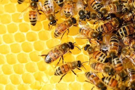 El estudio parte de la base de que las abejas entienden el concepto de cero.