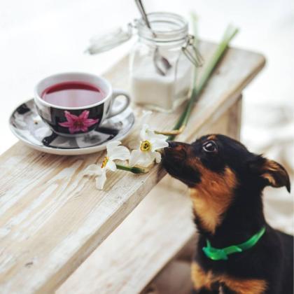 La cafetería The Doger Café combina la gastronomía con la pasión por los perros.