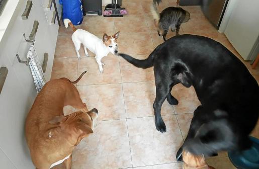 Ana Gamundí convie con estos perros y gatos en su piso de Palma. En total tiene seis animales.
