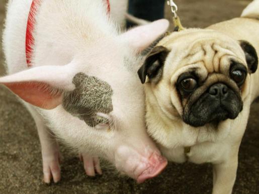 Los objetivos de la ordenanza son el bienestar de los animales, la convivencia y el respeto de los espacios públicos.