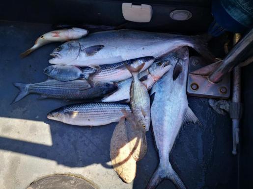 Imagen de las capturas de los pescadores furtivos.
