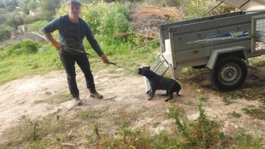 Un funcionario del Ajuntament d'Andratx con el perro que intentó escapar.