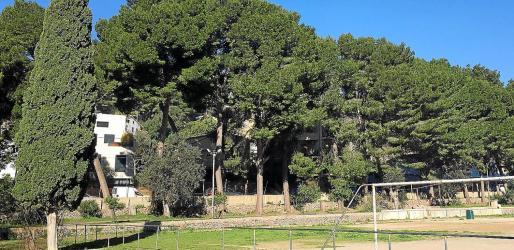 Los vecinos y un colegio cercano temen que algunos árboles puedan caer.