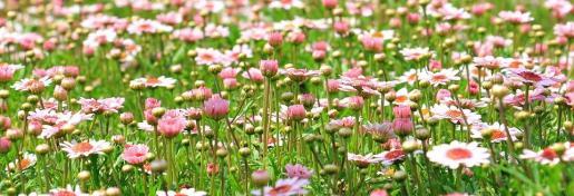La primavera comienza este miércoles y se prolongará hasta el 21 de junio.