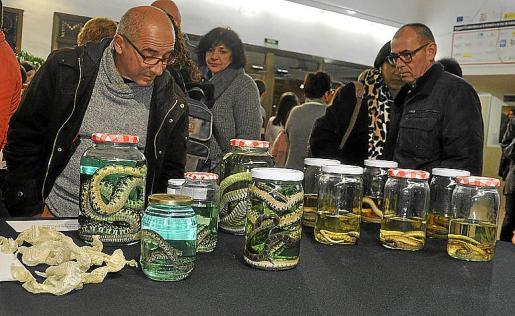 Ejemplares de serpientes invasoras que han sido estudiados.
