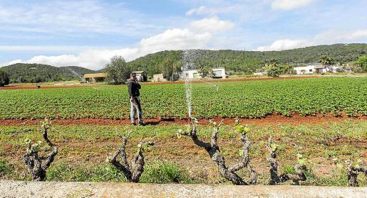 Entre los expedientes para nuevas construcciones agrarias destaca el número de peticiones de explotaciones de riego. Desde 2015 se han solicitado 57 autorizaciones de las que un total de 40 han recibido el visto bueno del Govern.