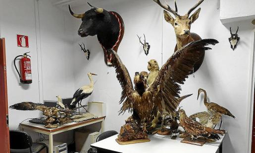 Algunas piezas de la colección de historia natural de Lluc.