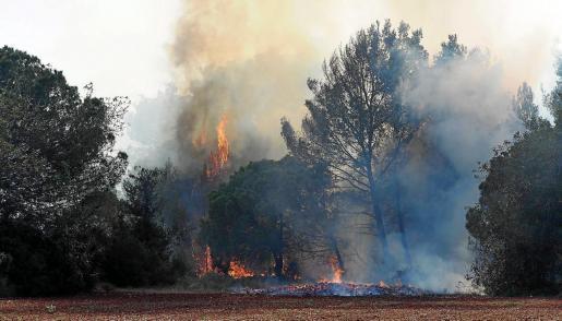 Imagen del incendio en una zona forestal de Santa Gertrudis ya extinguido.