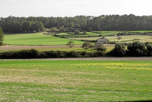 De momento, los campos de cereales, legumbres y forrajes son los más afectados.