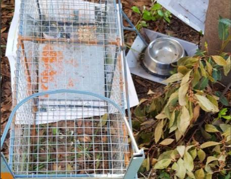 Imagen de una de las jaulas instaladas en los últimas semanas en Mancor de la Vall donde Baldea ha capturado y esterilizado con su quirófano móvil a los felinos que posteriormente son puestos en libertad.