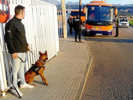 'Log', el perro detector de drogas, antes de entrar en acción.