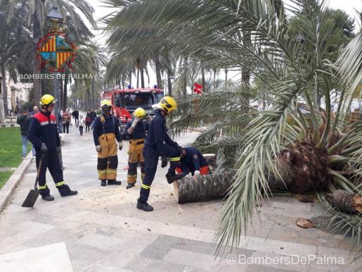 Los bomberos trocean el tronco caído en mitad del paseo.