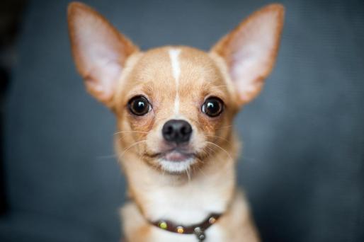 El propietario del establecimiento deportivo de Mahón sostenía que a medianoche un varón acompañado de un perro había intentado entrar en su local tras forzar la cerradura de la puerta de acceso.