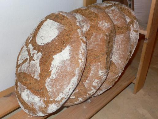 Más de veinte panaderos profesionales de Mallorca compiten en el concurso del mejor pan moreno.