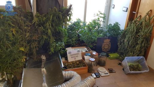 La Policía inició la investigación hace varios meses al detectar un incremento del consumo de marihuana.