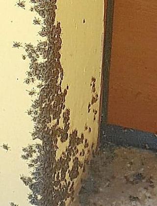Imagen de los insectos en la puerta de una finca.