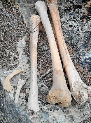 Los restos encontrados están en una zona de difícil acceso en medio de la montaña.