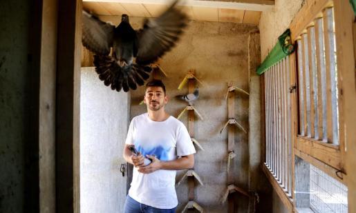 Carlos Adrover pagó cerca de 1.000 euros por el ave, una hembra que ha bautizado como 'Tyson',