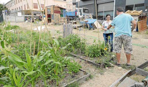 Siles y Gaertner recogen algunas de las hortalizas que ya están maduras de sus parcelas.