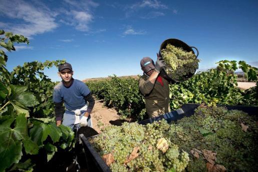 Trabajadores haciendo la vendimia en La Rioja.