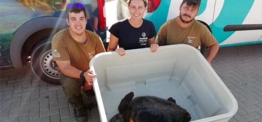La compañía facilitó el traslado del animal a Mallorca para que se pueda recuperar del postoperatorio.