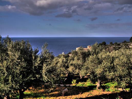 Imagen de la zona de Son Marroig
