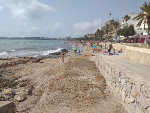 La parte más dañada cada temporada suele ser el extremo norte, dejando las rocas al descubierto. Pero en la actualidad toda la playa está afectada, tanto la parte de Sant Llorenç como la de Son Servera. Desde los ayuntamientos han recibido muchas quejas .